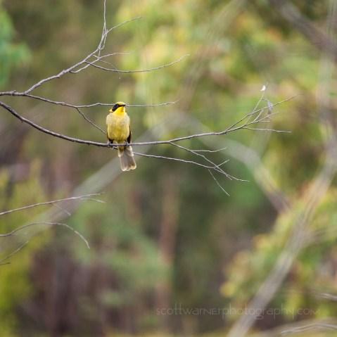 Birdlife on the Bald Rock Creek circuit