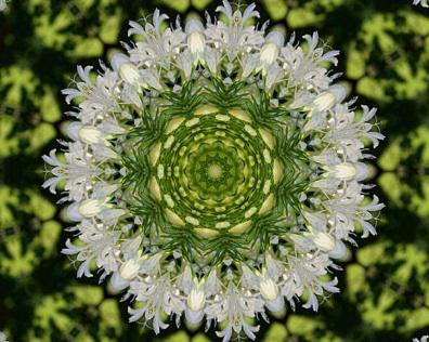 floral5.jpg