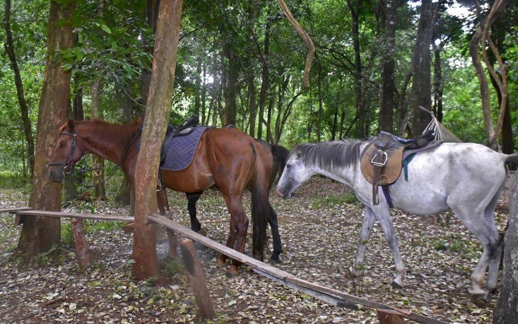forest_horse_nairobi
