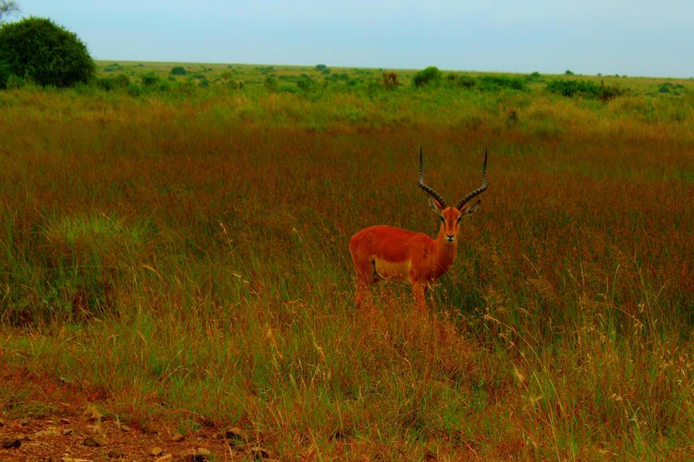 African_Wildlife