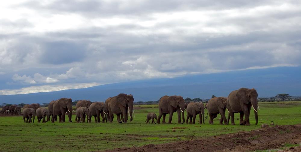 Amboseli_National_Park