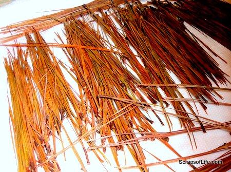 Pine needles drying