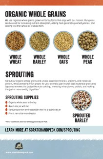 Sprouting organic whole grains