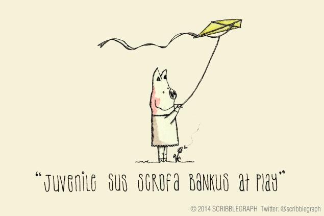 Sus scrofa bankus flying a kite.