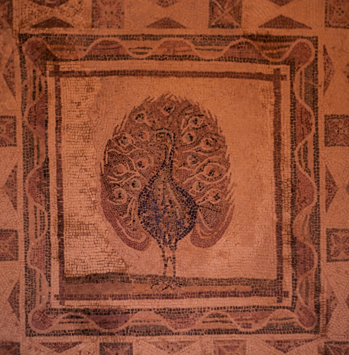 Peacock, House of Dionysus, Paphos
