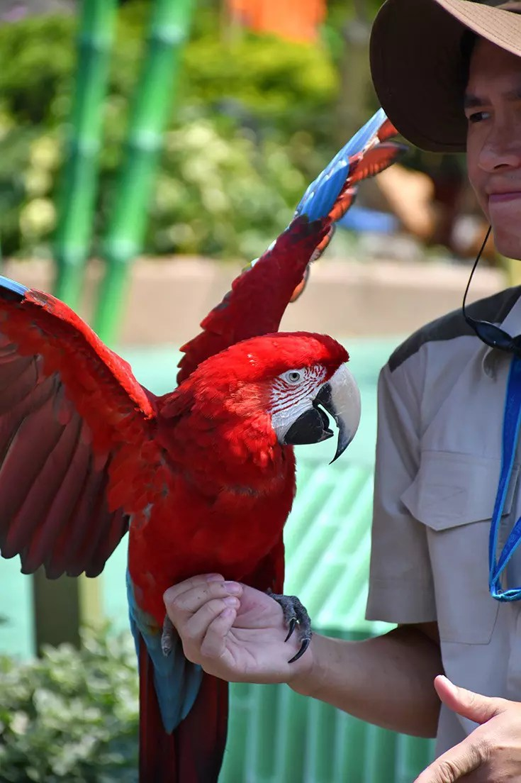 Ocean Park Hong Kong Macaw Performance