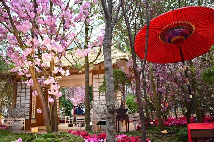 Sakura Japan Fair 2018, Flower Dome Gardens by the Bay