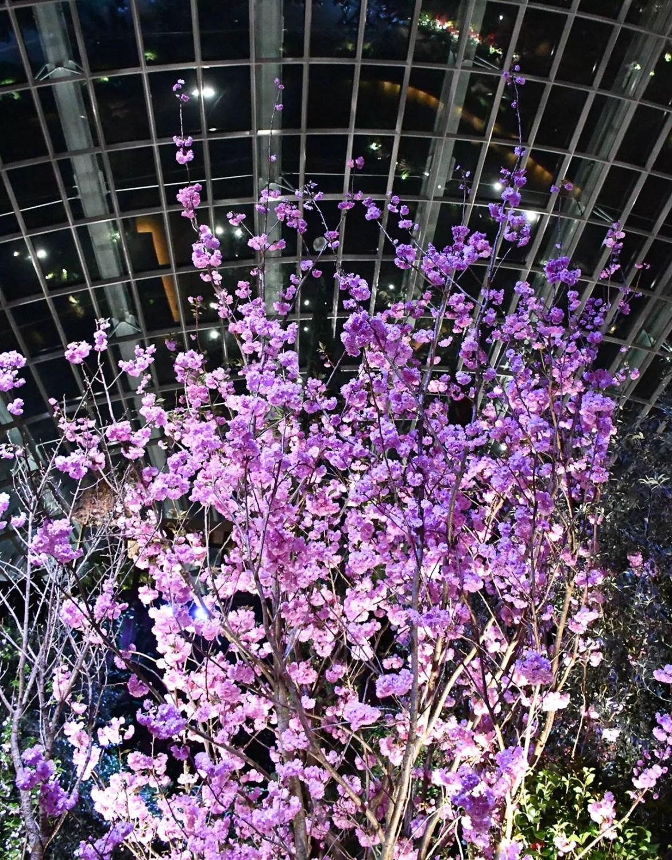 Sakura Japan Fair 2018 - Flower Dome After Dark.