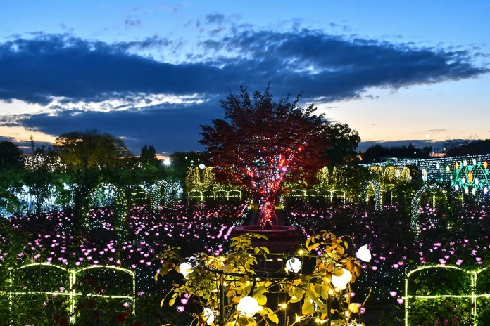 Ashikaga Flower Park Flower Fantasy 2018 at Evening Hour.