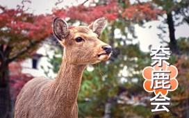 Nara Park Deer Gang