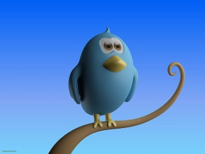 Twitter : quel oiseau êtes-vous ? (1/2)