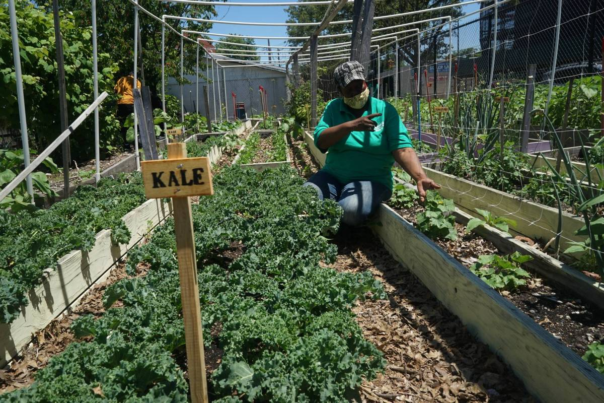 Brenda Dushane tends to the leafy greens in Green Valley Farm.