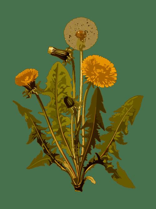 Differenze tra fitoterapia omeopatia ed erboristeria