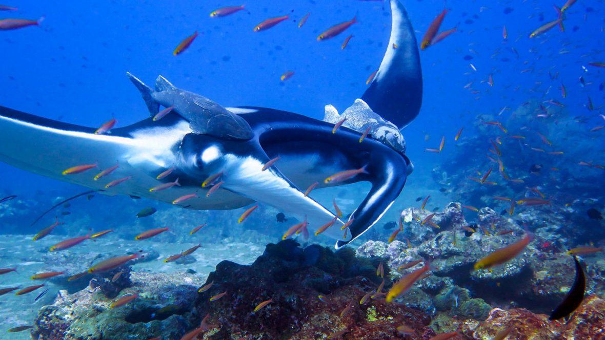 Similan Islands Liveaboard Diving Liveaboards Phuket