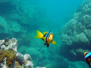Japanese I-1 Sub Solomon Islands dive trip scuba diving New Zealand Sea Adventures Wellington