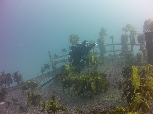 - Wellington Scuba Store dive gear diving equipment Wellington PADIi dive courses Wellington TDI courses KISS Rebreathers