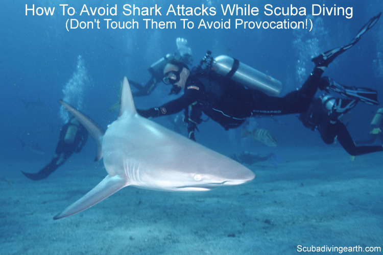 How to avoid shark attacks while scuba diving