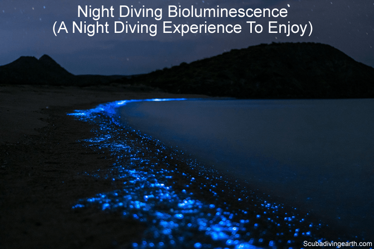 Night Diving Bioluminescence (A Night Diving Experience To Enjoy)