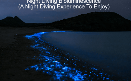 Night Diving Bioluminescence - A Night Diving Experience To Enjoy