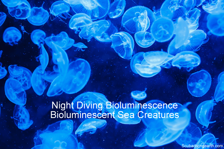 Night Diving Bioluminescence and bioluminescent sea creatures