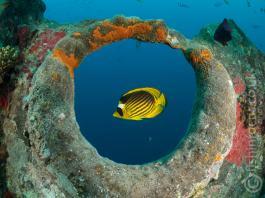 fishinfocus, Mario Vitalini, Thistlegorm, Scuba Travel