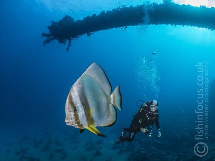 Giannis D, fishinfocus, Scuba Travel, Red Sea, Egypt
