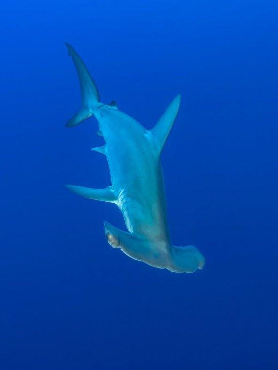 fishinfocus, Scuba Travel