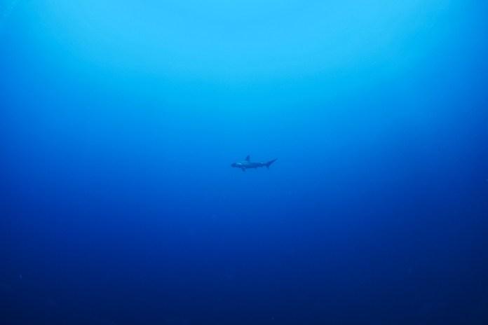 fishinfocus, Scuba Travel, Hammerhead, Shark Quest Photography
