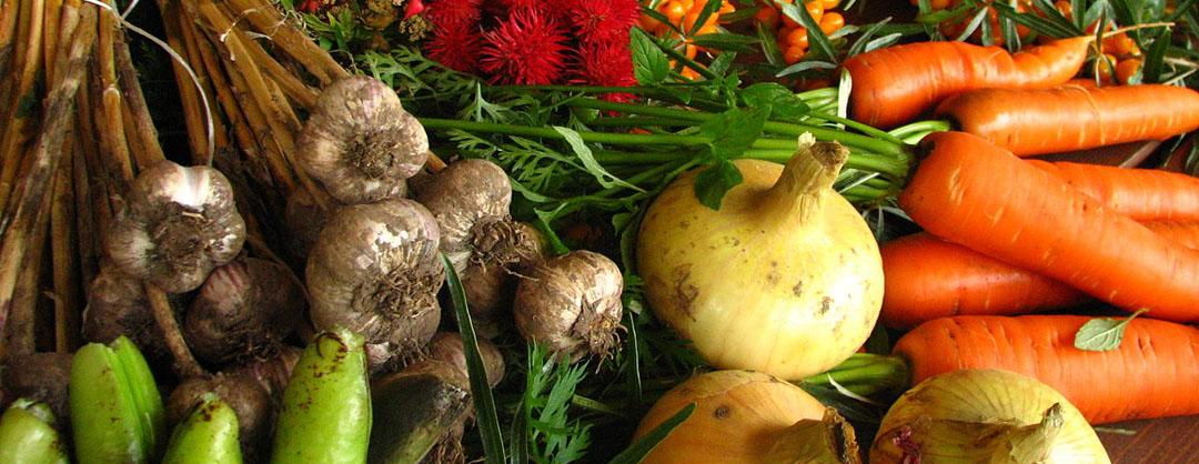 Solidarische Landwirtschaft in Mainz