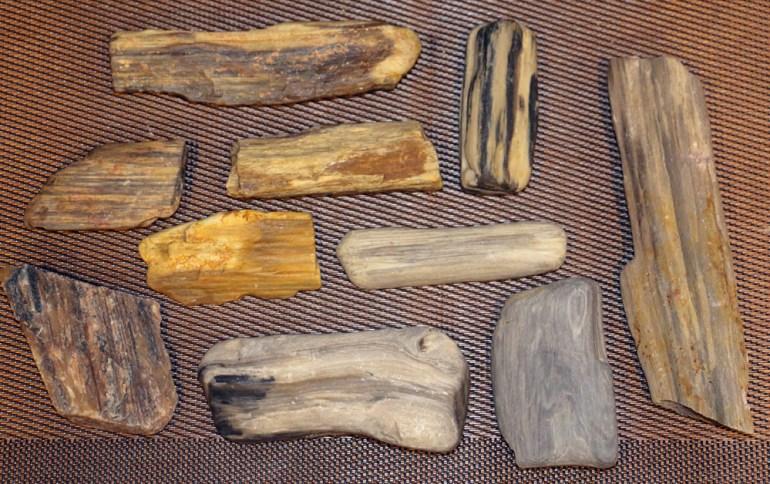 Petrified Wood - Buffalo Gap National Grasslands, South Dakota