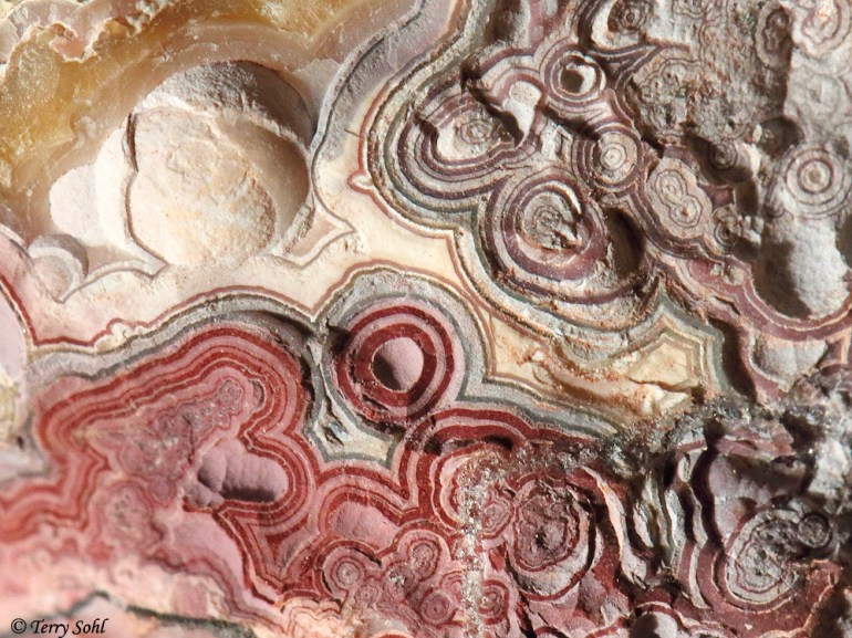 Mexican Crazy Lace Agate - Macro Photograph
