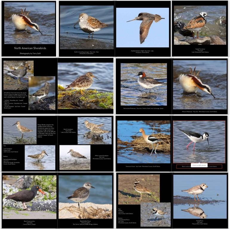 Shorebird photobook Photography by Terry Sohl