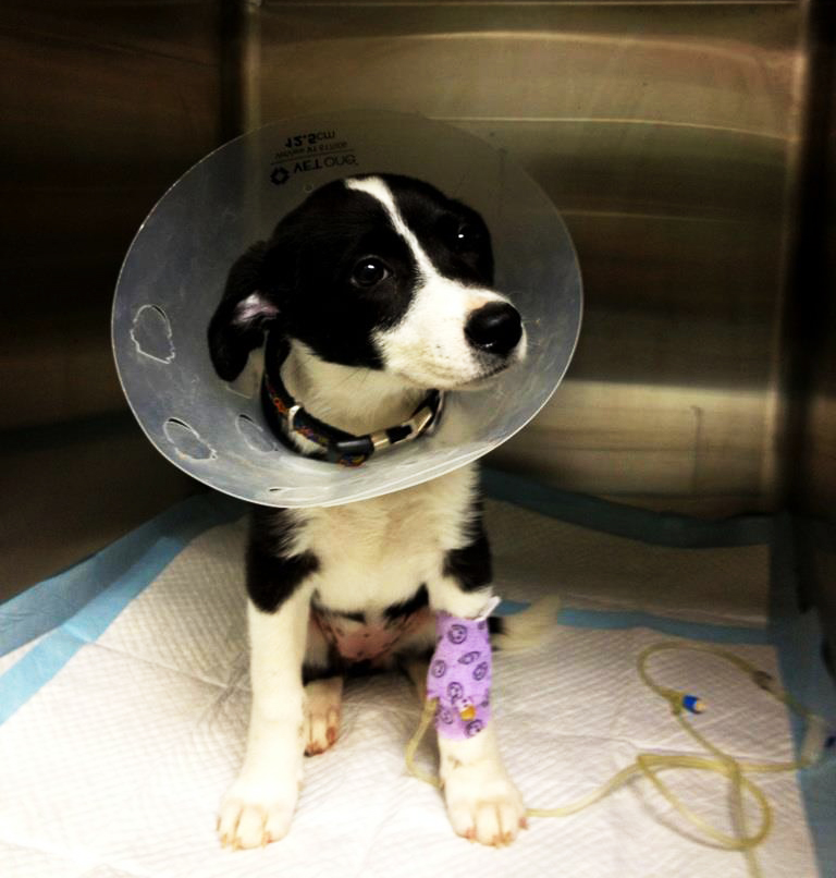 HANA Fund Puppy with Cone of Shame