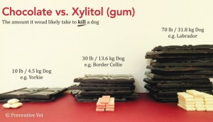 Xylitol v chocolate