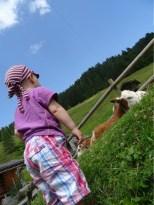 A zase ty krávy