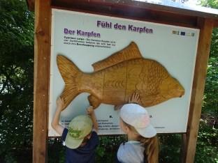 Wald - Wasser- Fish