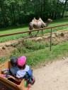 08e_zoopark