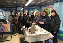 """Un nuovo """"parco gatti"""" per la città di Novara?"""
