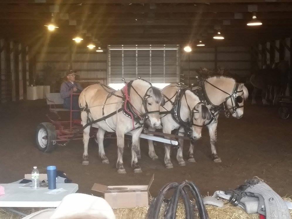 Horse Club South Dakota State University