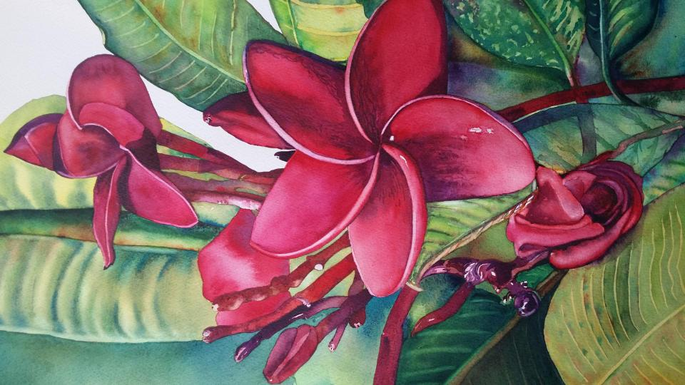 Beautiful Plumeria by Irena Noreikaite Petraitiene