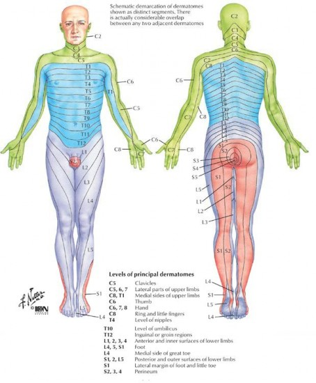 dermatome map of body