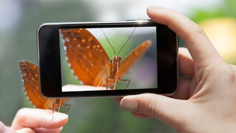Woman photographing a butterfly wit a smart phone