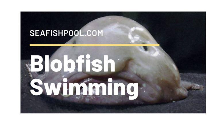 Blobfish Swimming