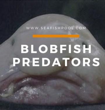 Blobfish Predators