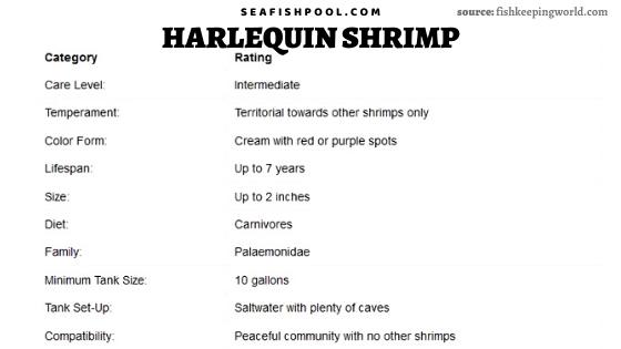 harlequin shrimp harlequin shrimp for sale harlequin shrimp food harlequin shrimp diet hawaiian harlequin shrimp feeding harlequin shrimp harlequin shrimp size buy harlequin shrimp