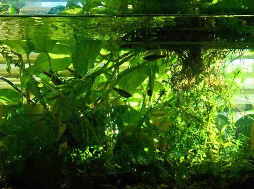 aeration for aquarium