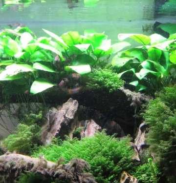 healthy aquarium