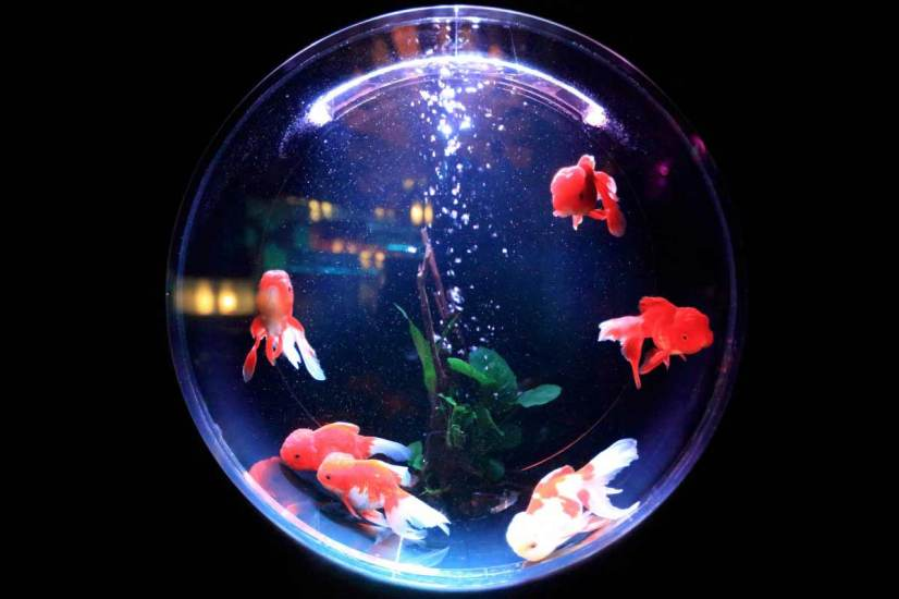 how to maintain a freshwater fish tank