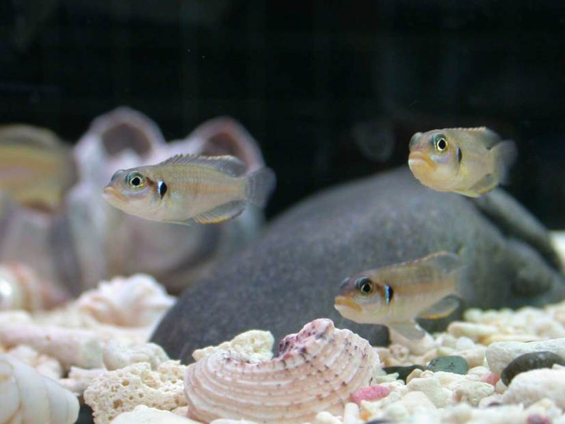 how to make a saltwater fish tank