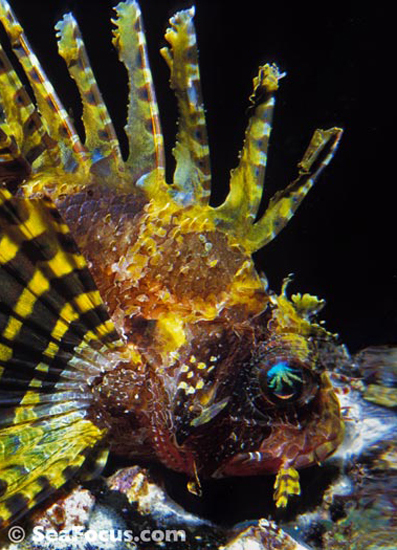 Diving Report For Dumaguete And Apo Island Philippines